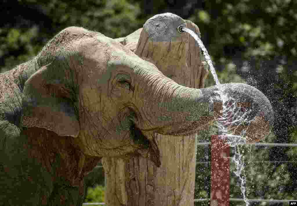 Из-за жары страдают не только люди, но и обитатели зоопарков На фото - слон из зоопарка в Испании