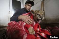 An employee covers a lion cub with a quilt during the blackout at the Safari Park Taigan in the town of Belogorsk, Crimea.
