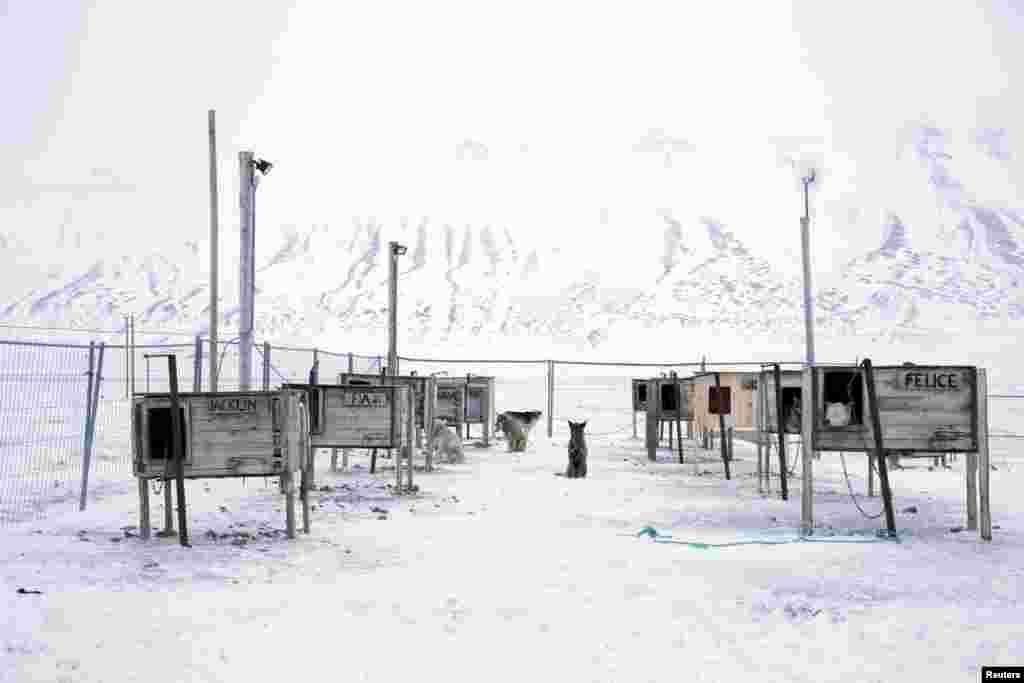 Поселок находится в северной части архипелага Шпицберген, всего в 1200 км от северного полюса. Ровно 100 лет назад острова населяли лишь медведи и олени. Но когда на севере появилась промышленное производство, их появления стали более редкими