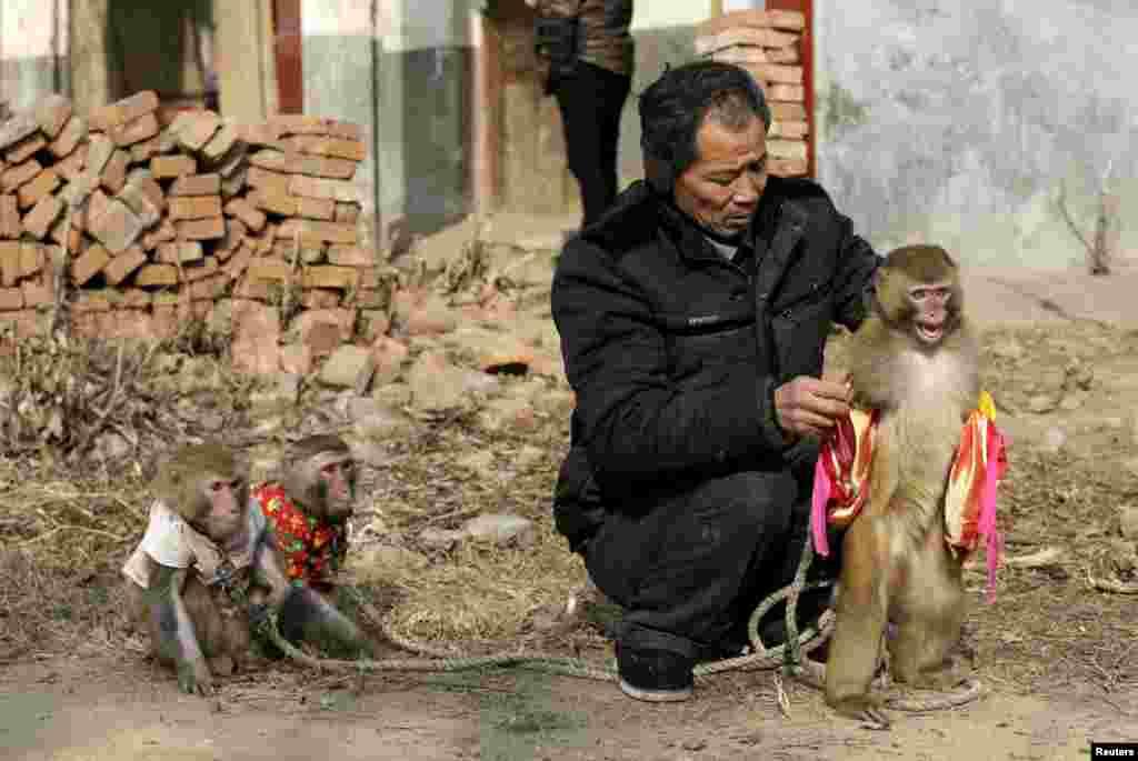 Защитники животных неоднократно поднимали вопрос об условиях содержания обезьян, но широкого резонанса это не вызывало