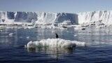 Льда в Антарктике с каждым годом все меньше: это угрожает Лондону и Нью-Йорку