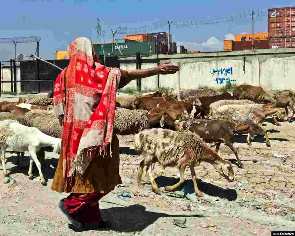 Кучи легко узнать по красочной одежде и палаточным лагерям, окруженным животными