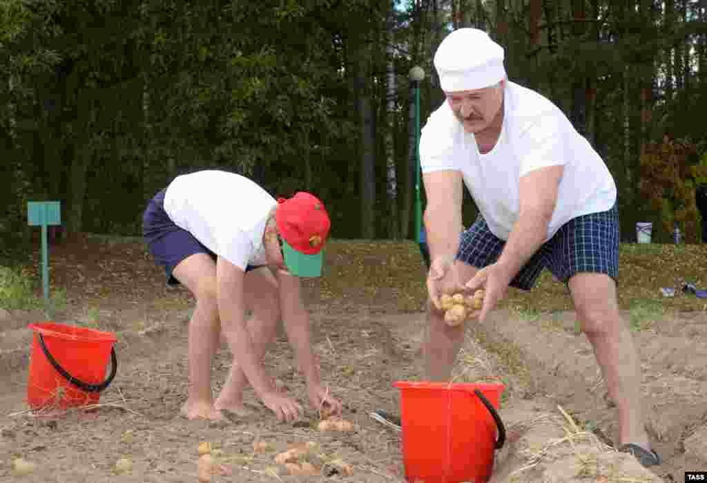 Президент Беларуси Александр Лукашенко заботится об обездоленых своей страны. В августе он вместе со своим сыном собрали 70 кг картошки за 1,5 часа, чтобы передать их в детские дома и дома престарелых