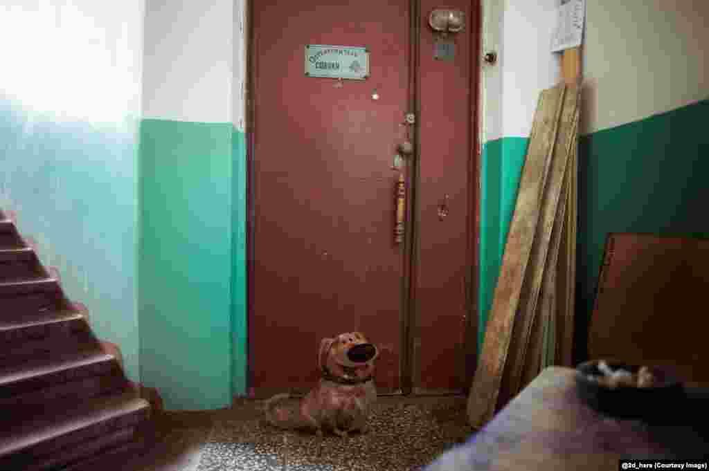 """Даг, говорящая собака из мультфильма """"Вверх"""", и дверь в квартиру с табличкой """"Остерегайтесь собаки"""""""