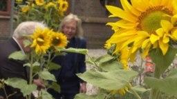sunflowers videograb