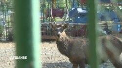 В зоопарке Душанбе погибли страус и олень
