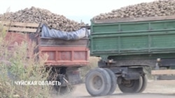 Как сахарные заводы Кыргызстана оказались на грани банкротства