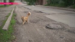 Дорожные ямы с лицом киевского мэра Кличко