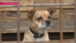 Кыргызстан жестоко борется с бродячими собаками