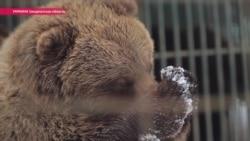Посттравматический медвежий синдром: как возвращают к жизни косолапых, пострадавших от человека