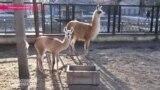 Зоопарк на линии фронта