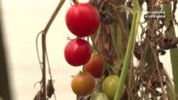 #ВУкраине: как столице томатов стать курортом