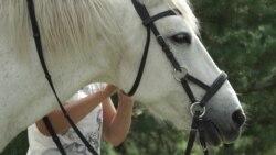 Бизнес-план: сколько стоит содержать лошадей