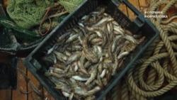 """#ВУкраине: в Азовском море может быть уничтожен """"рыбный роддом"""""""
