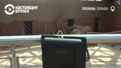 По польскому зоопарку ездит робот и показывает животных больным детям