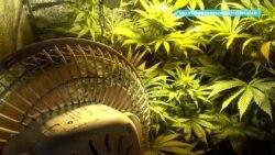 Парализованного краснодарца обвиняют в сбыте наркотиков и хранении боеприпасов