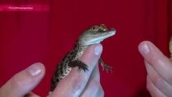 Тбилиси помогут крокодилами