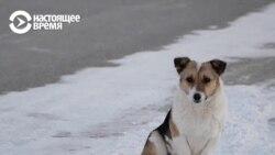 Брошенный пес полгода ждал хозяина на остановке. И дождался