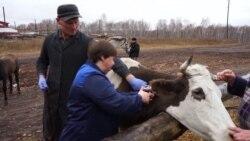 Человек на карте: как ветеринар из Красноярского края борется с антибиотиками в мясе