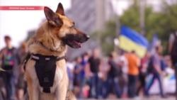 """""""Украинцам навязывается гомосексуализм"""", – как в Киеве не удалось сорвать гей-парад"""