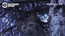 Неизвестный герой спас кошку в Ставрополе после отказа МЧС