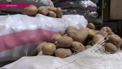 """""""Картофельная война"""" закончилась, фермеры считают потери"""