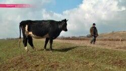 Пастухи минных полей Луганска