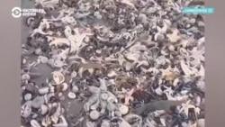 На Камчатке в районе Халактырского пляжа обнаружили загрязнение Тихого океана