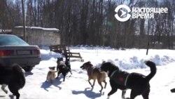Как в смоленской деревне появился приют для животных