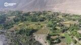 Азия 360°: Зардалы