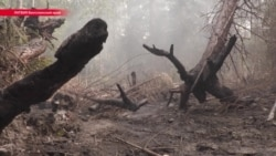 В Латвии уже неделю горят леса, страна просит помощи у Евросоюза