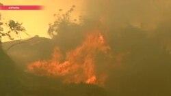 Ветер из пустыни и задержанные поджигатели: Израиль охвачен лесными пожарами
