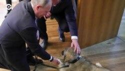 Звездные войны и сербский щенок. Вечер с Ириной Ромалийской